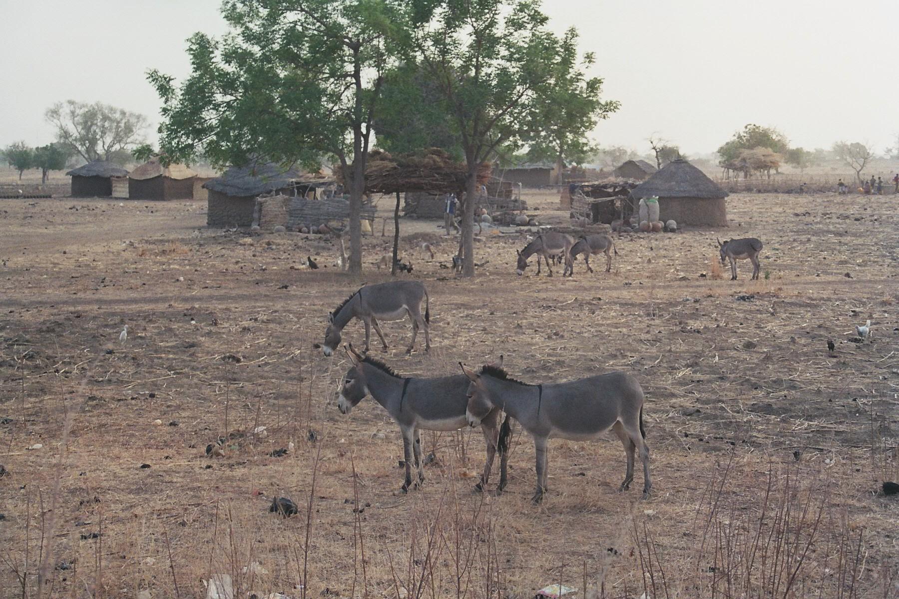 Sculpture Colcombet Burkina Faso