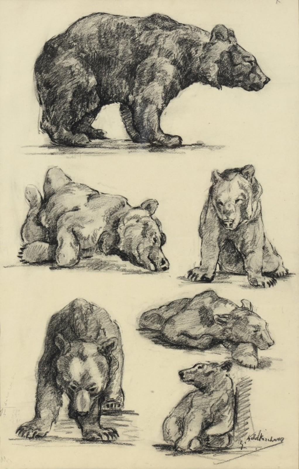 Colcombet études d'ours