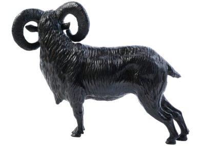 Mouflon - Vue 01