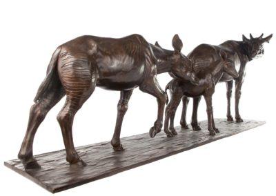 Okapis - Vue 02
