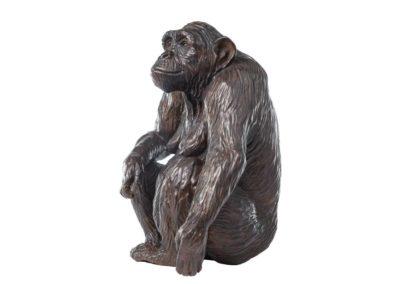 Xanthippe, femelle chimpanzé
