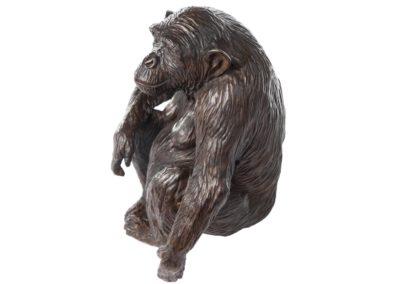 Xanthippe femelle chimpanzé - Vue 01