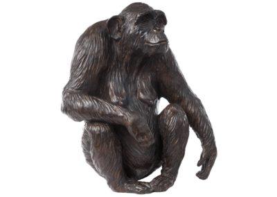 Xanthippe femelle chimpanzé - Vue 02