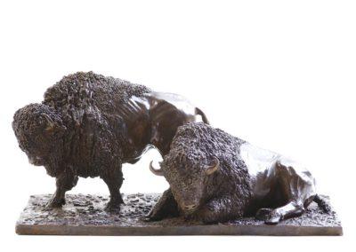 Deux Bisons d'Amérique