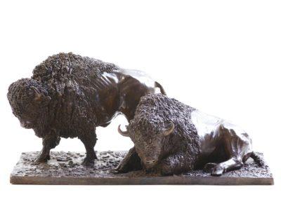 Deux bisons d'Amérique - Vue 01