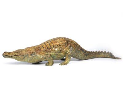 Crocodile du Nil en marche - Vue 01