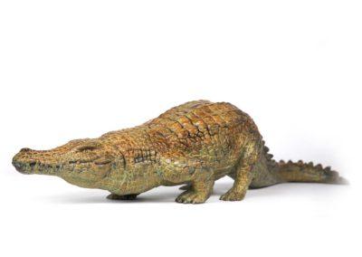 Crocodile du Nil en marche - Vue 02