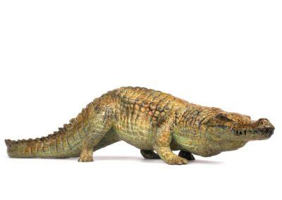 Crocodile du Nil en marche - Vue 04