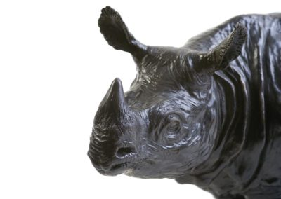 Rhinocéros indien - Vue 01