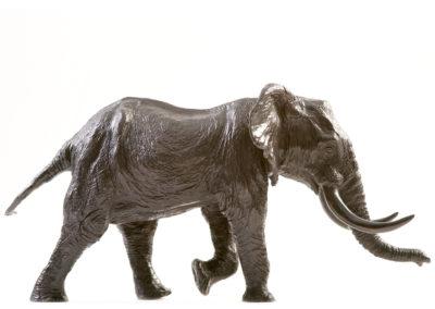 Éléphant d'Afrique chargeant (ÉPUISÉ)