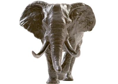 Eléphant-d'Afrique-chargeant-vue-01