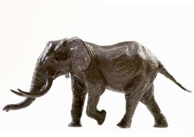 Eléphant-d'Afrique-chargeant-vue-02
