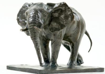 Eléphant-d'Afrique-en-alerte-vue-001