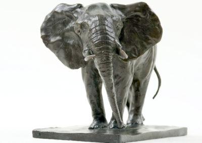 Eléphant-d'Afrique-en-alerte-vue-002