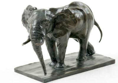 Eléphant-d'Afrique-en-alerte-vue-003