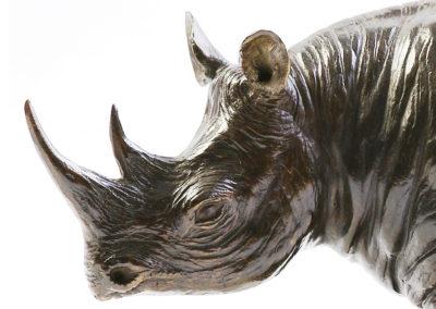 Rhinoceros-noir-vue-01