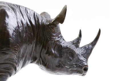 Rhinoceros-noir-vue-02