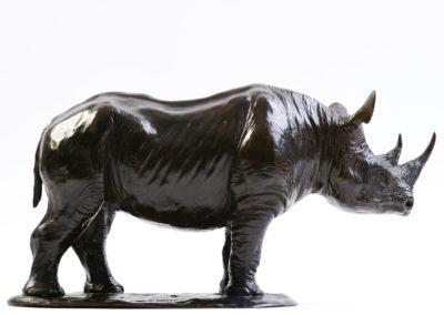 Rhinoceros-noir-vue-03