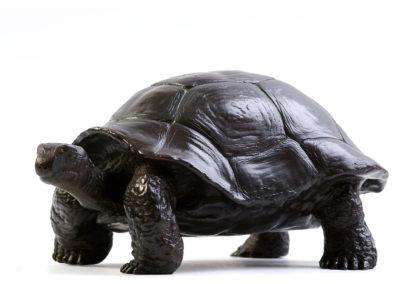 Tortue-géante-des-Seychelles-vue-01