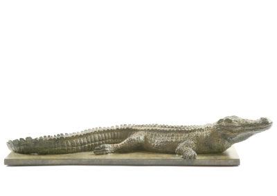 Crocodile-du-Nil-vue-02