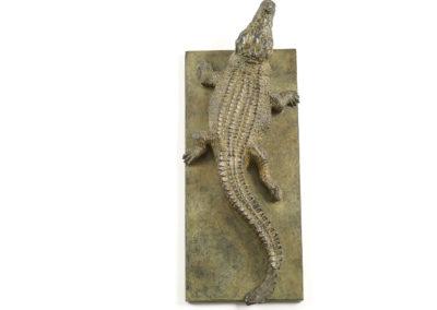 Crocodile-du-Nil-vue-03