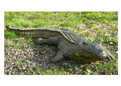 Crocodile-du-nil-grand-modèle-vue-02