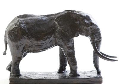 Grand-éléphant-d'Afrique-vue-01