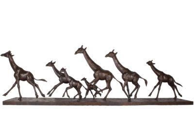 Les girafes au galop