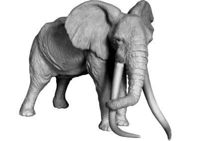 «Le patriarche» – Vieil éléphant d'Afrique (projet)