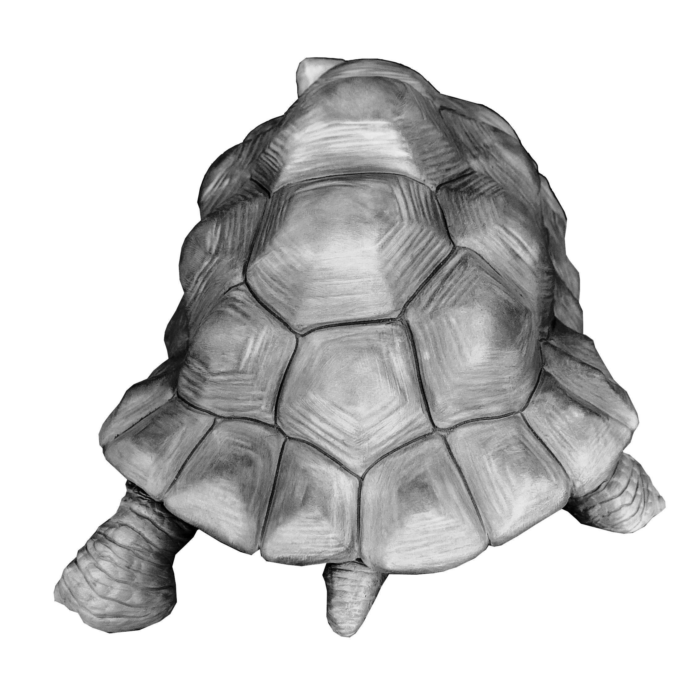 Bronze Colcombet tortue géante Aldabra