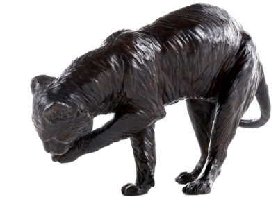 Tigre-se-léchant-la-patte-vue-02