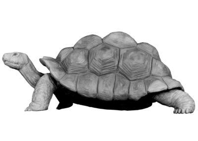 Tortue géante d'Aldabra (projet)