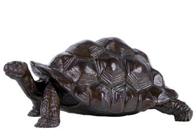 Tortue géante d'Aldabra