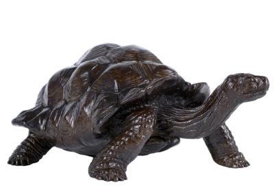 Tortue-géante-d'Aldabra-vue-01