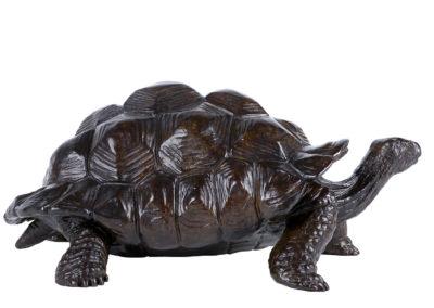 Tortue-géante-d'Aldabra-vue-02