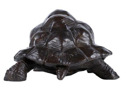 Tortue-géante-d'Aldabra-vue-03