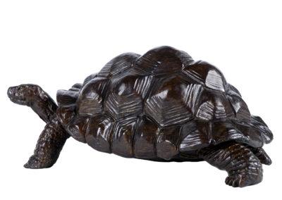 Tortue-géante-d'Aldabra-vue-04