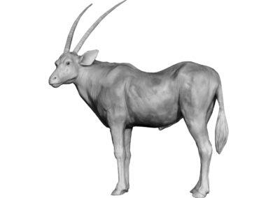 Oryx tête tournée (Projet)
