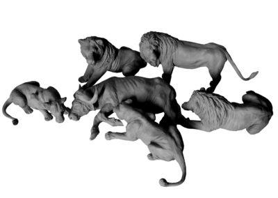 Festin-des-lions-vue-01