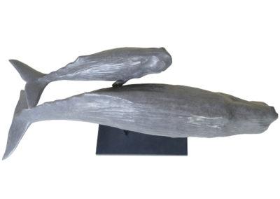 Cachalots-vue-2