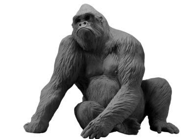 Le gorille Pythagore (projet)