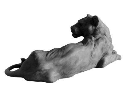 Lionne couchée (projet)