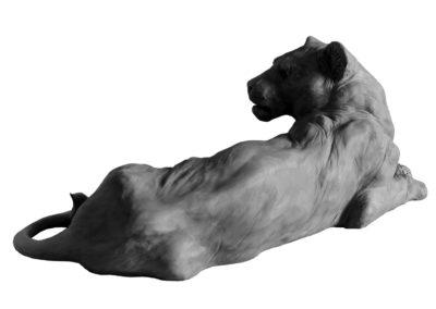Lionne-couchée-vue-02