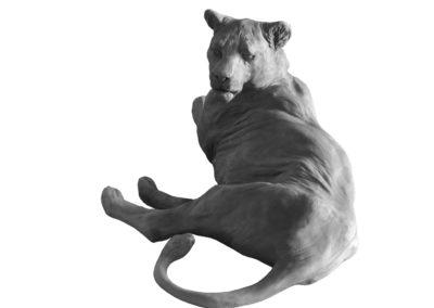 Lionne-couchée-vue-03