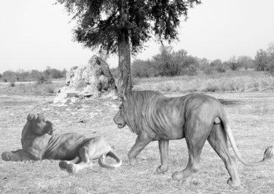 Lion-et-lionne-vue-01