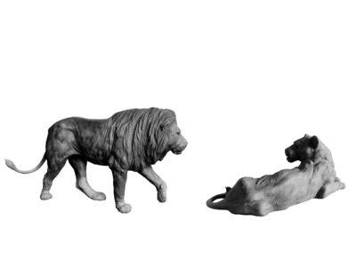 Lion-et-lionne-vue-02