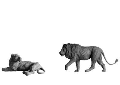 Lion-et-lionne-vue-03