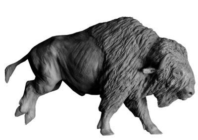 Bison-d'Amérique-au-galop-vue-01