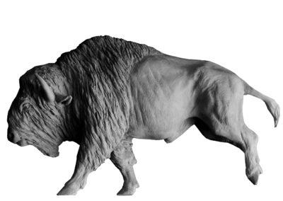 Bison-d'Amérique-au-galop-vue-02