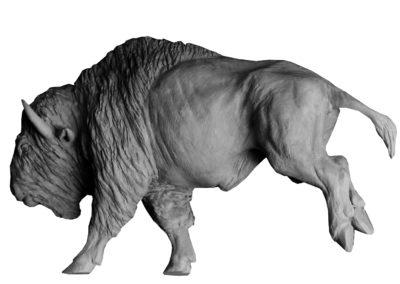Bison-d'Amérique-au-galop-vue-03